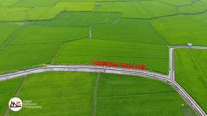 sawah solok